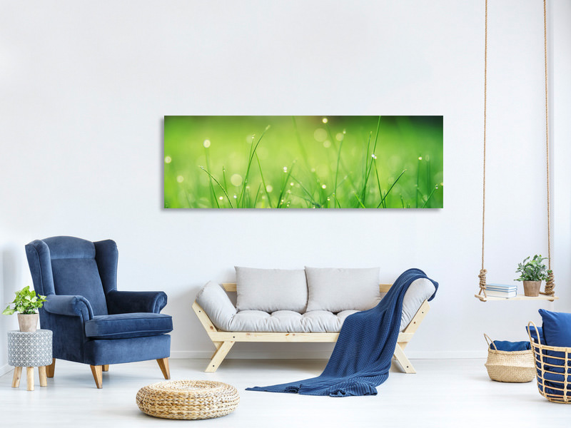Panoramic Canvas Print Meadow with morning dew