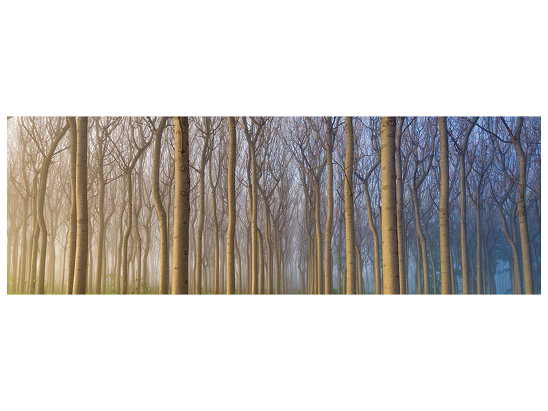 Panoramic Canvas Print Morning Of The Forest