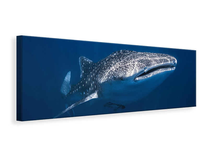 Panorama Canvastaulu Whale Shark