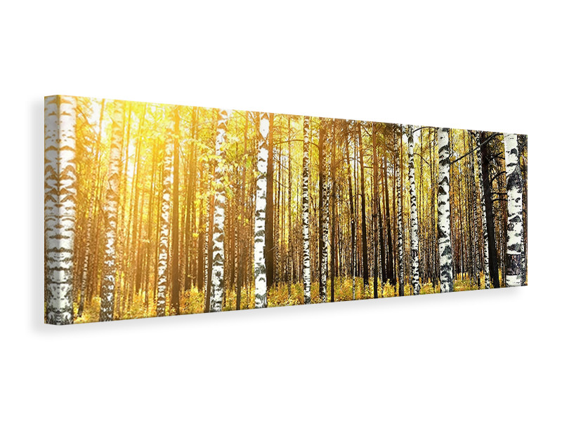 Panoramic Canvas Print Birch Forest
