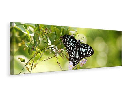 Panoramic Canvas Print Papilio Butterfly XXL