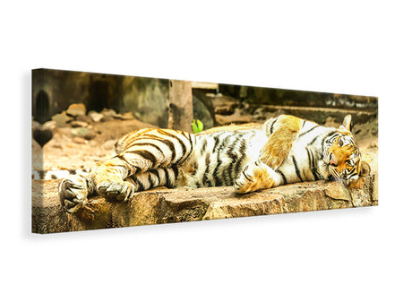 Panoramic Canvas Print The Siberian Tiger
