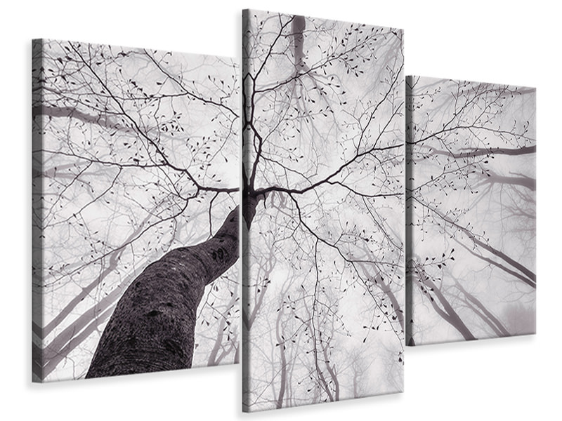 Modern 3 Piece Canvas Print A View Of The Tree Crown