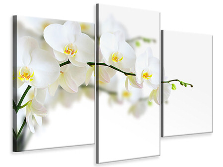 Modern 3 Piece Canvas Print White Orchids