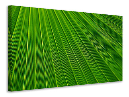 Canvastaulu Palm stripe 1