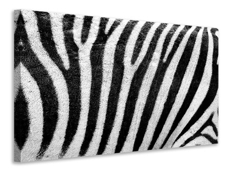 Canvastaulu Strip of the zebra