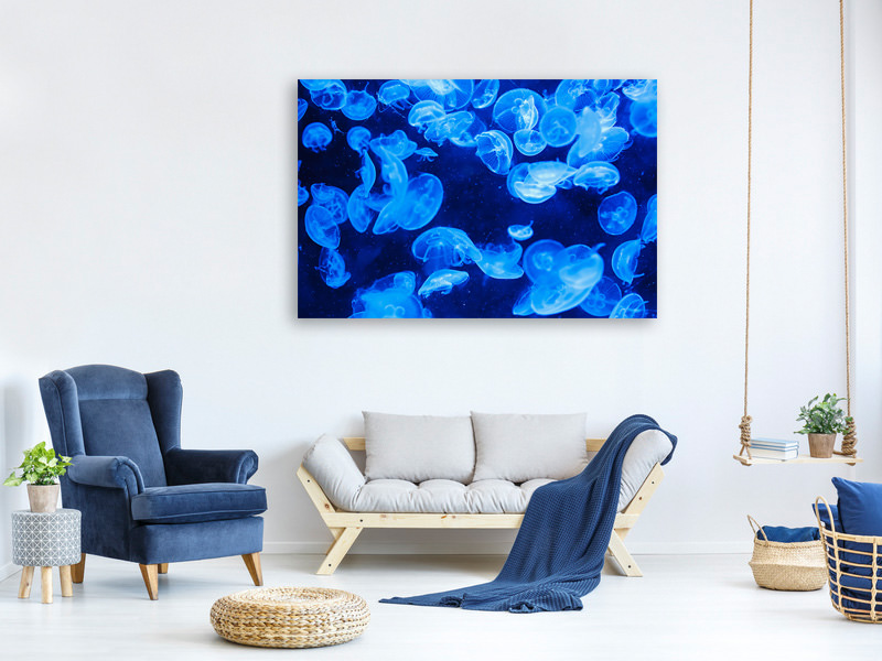 Canvas print Many jellyfish in the blue water