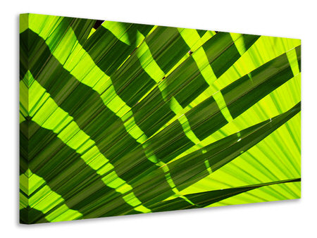 Canvas print The palm leaf in XL