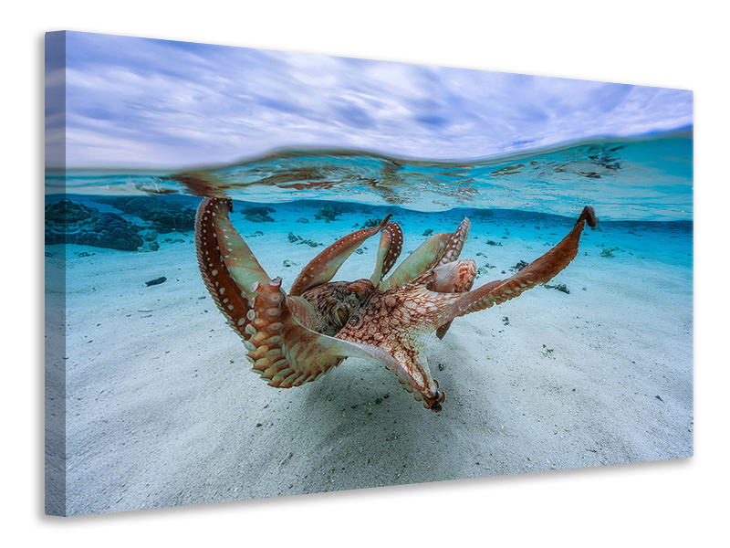 Canvas print Octopus II