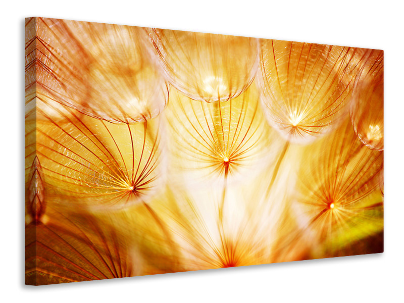 Canvastaulu Close Up Dandelion In Light