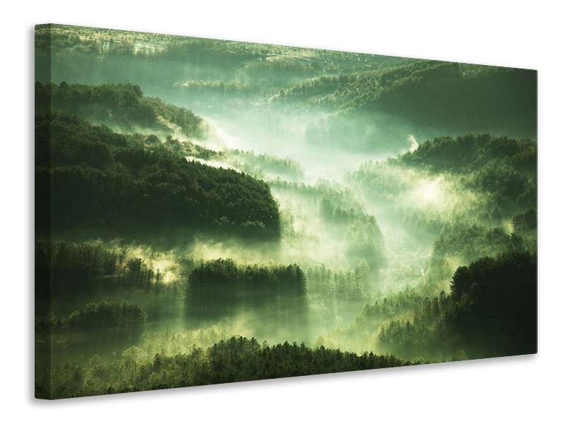 Canvas print Over The Woods