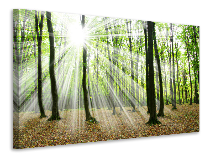 Canvas print Magic Light In The Trees