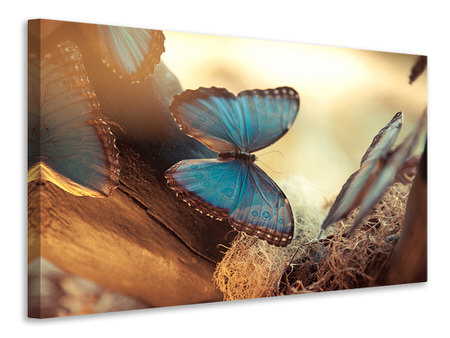 Canvas print Butterflies