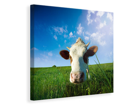 Canvas print The Cow