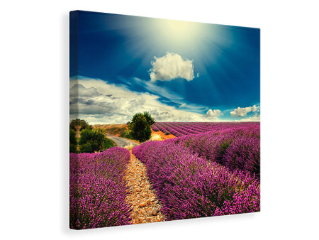 Canvas print The Lavender Valley