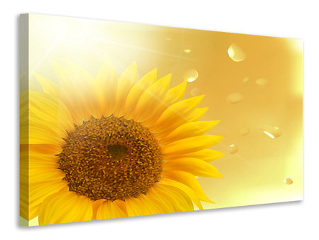 Canvas print Sunflower in Morning dew