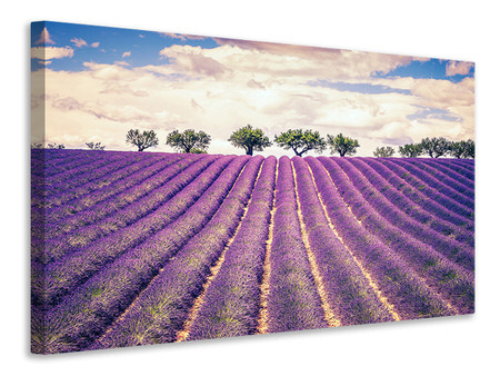 Canvastaulu The Lavender Field
