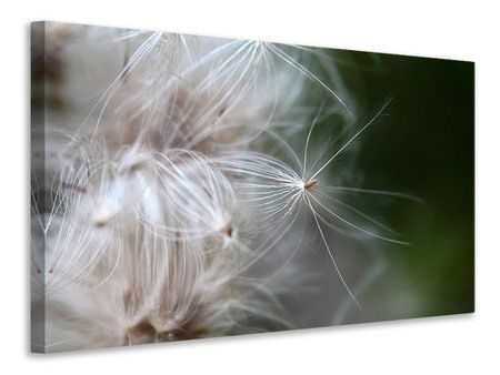 Canvas print Close up Flowers Fibers