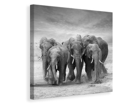 Canvas print The Elephants