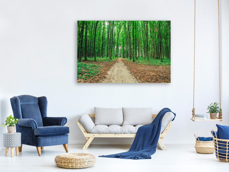 Canvas print Pine Forests